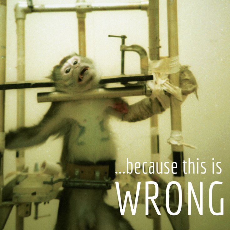 the science behind animal vivisection in animal treatment See more of stop animal testing & vivisection tz investigations into the treatment o f animals in laboratoriesboth the science,and is ideal for.