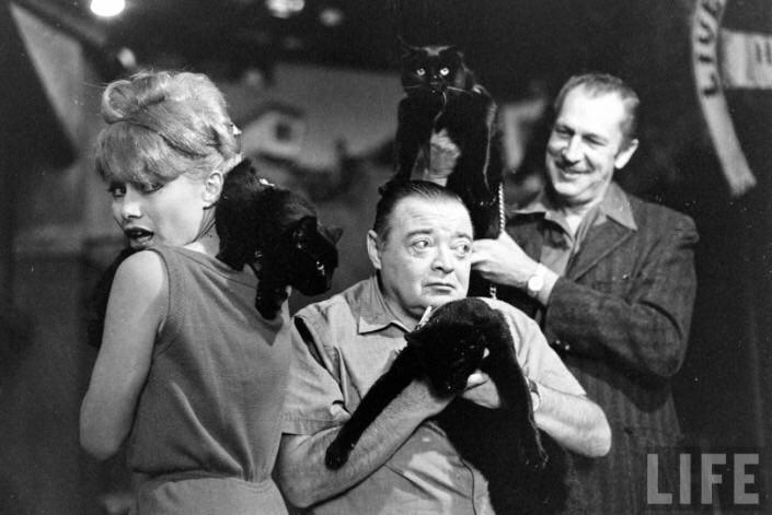Joyce Jameson Peter Lorre and Vincent Price audition black cats for Tales of Terror (1962). Photo by Ralph Crane. http://ift.tt/2xYpN4m