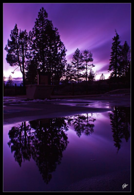 There can never be too much purple in the world.