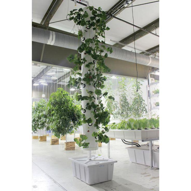 Vertical Garden Wall Plants