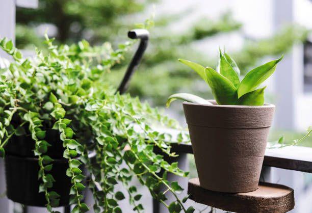 Jakie Rosliny Doniczkowe Najlepiej Oczyszczaja Powietrze W Mieszkaniu Plant Decor Home And Garden Types Of Pumpkins