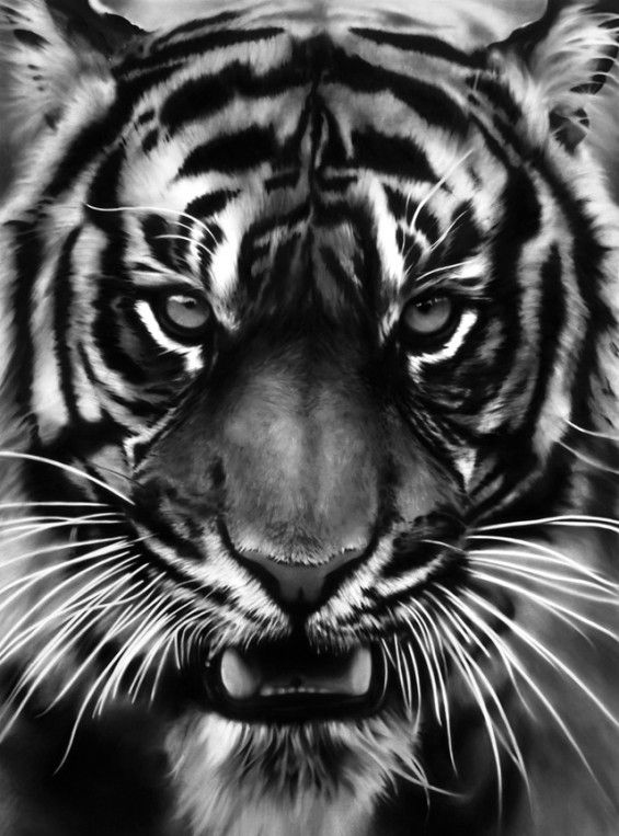 ROBERTO LONGO DRAWINGS: Big Cat, White Tigers, Charcoal Drawings, Charcoal Art, Beautiful, Robert Longo, Black, Bigcat, Animal