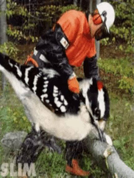 Texas Woodpeckersaw Massacre