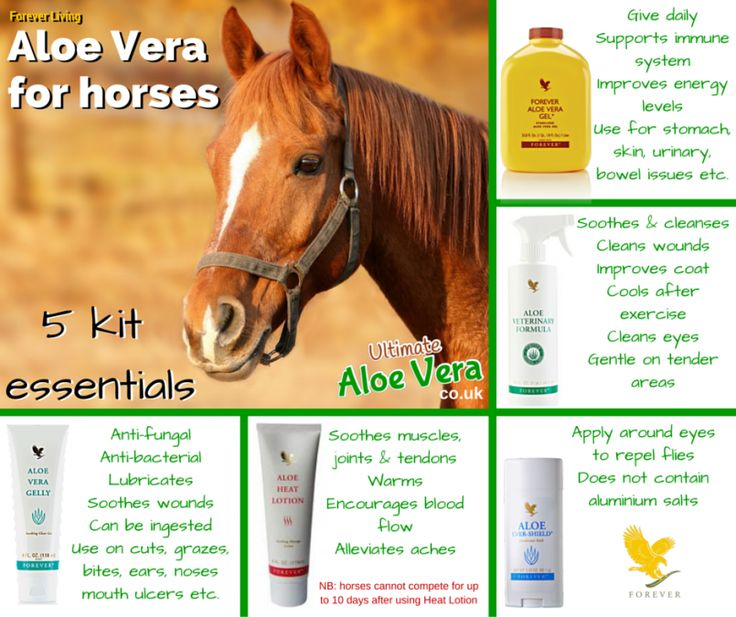 5 essential Aloe Vera Products for horses