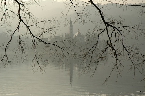 Church of Assumption on an island in Lake Bled, Slovenia.Slovenia Inspiration, Flats Spaces, Mists Fog, Water Photography, Mysteries Mists, Photography Trees, Lakes Bled, Landscapes Trees, Foggy Mists