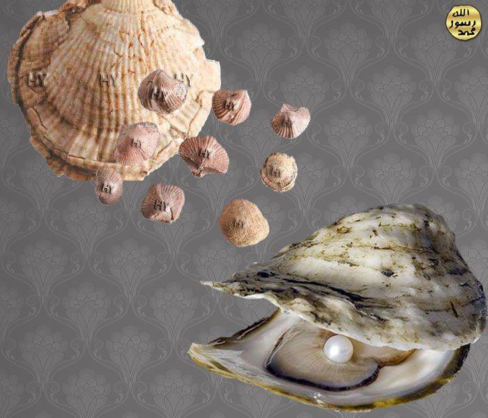 Istiridyeler http://dusuneninsanlaricin.com/30-fosilde-evrim-teorisinin-cokusu/