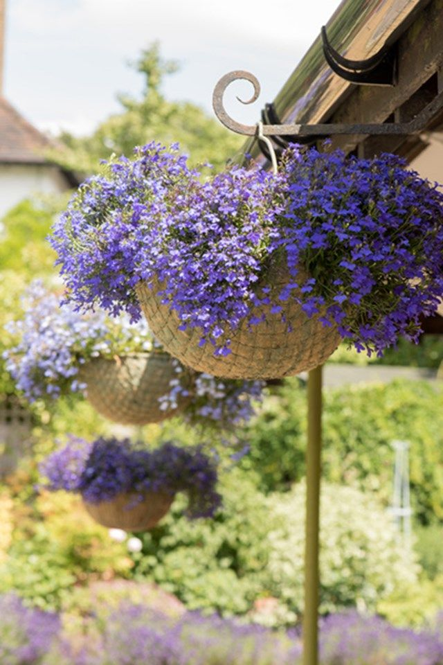 Hanging Baskets - Ready Made Hanging Baskets (houseandgarden.co.uk)