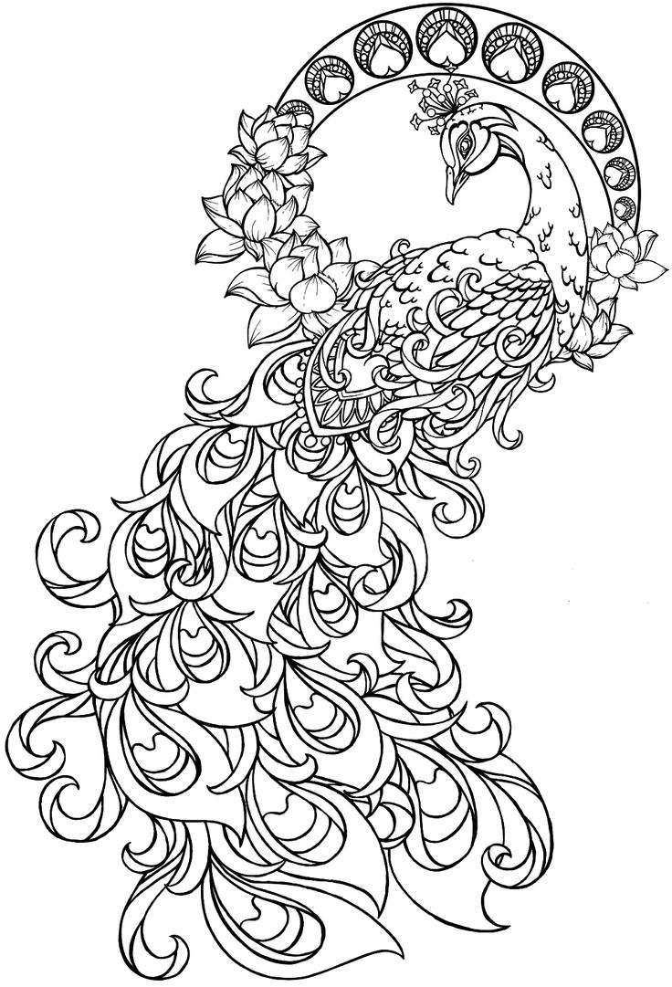 Peacock Coloring Page Peacock Pinterest Peacock Coloring Pages Peacock