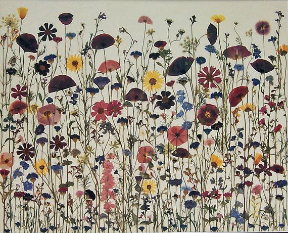 Field of Dreams 18 X 24 Pressed Flowers by HaleyJsNaturalArt, $50.00