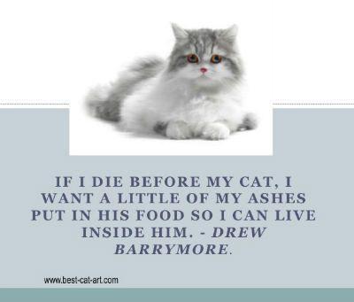 Cat Loss Quotes. QuotesGram