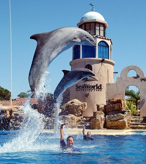 "SeaWorld in Orlando, Florida was one of my most favorite vacations with my parents. I was only able to spend one day so I'd love to go sometime when I have more time to spend there, when the rides are open, and when I can take the opportunity to ""swim with the dolphins"". That is a dream I'd love to fulfill."