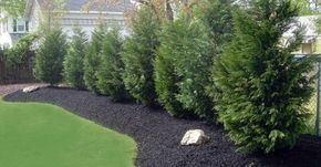 Spruce up your front or backyard in a jiffy—and gain an abundance of privacy at the same time—by planting any of these sets of fast-growing evergreen trees.