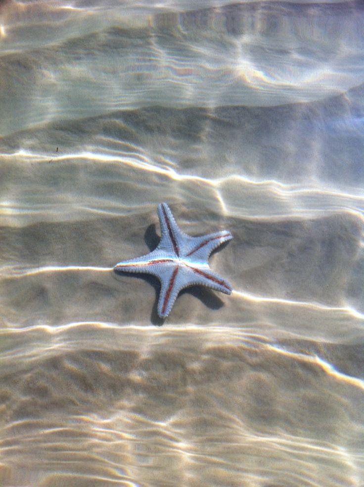 Starfish at Tangalooma Resort, Moreton Island Australia