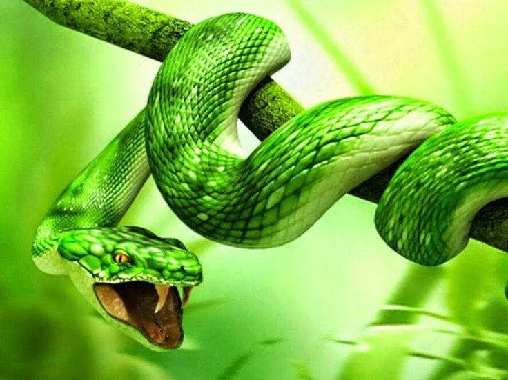 Zöld cobra