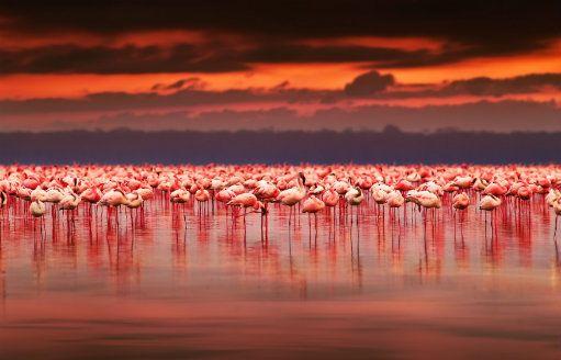 Ría Celestún, un paraíso rosa