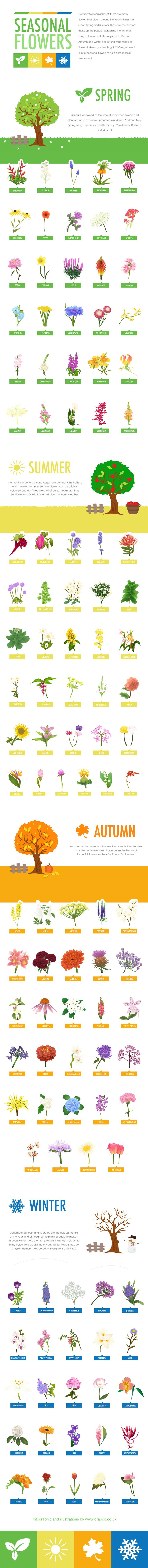 Seasonal Flowers [Hand Drawn Infographic] | ecogreenlove