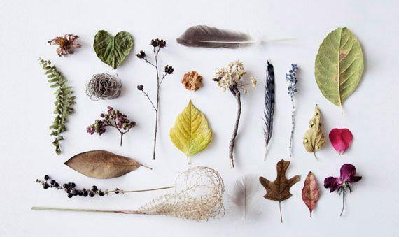 pretty dried plants