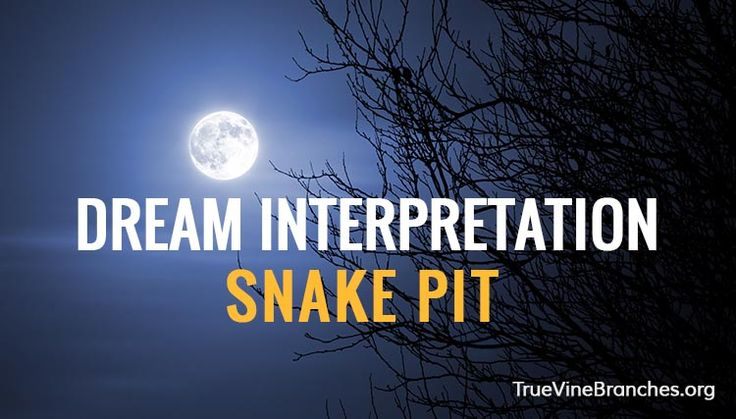 Here is an example of a snake dream interpretation by a student of our course on dreams.