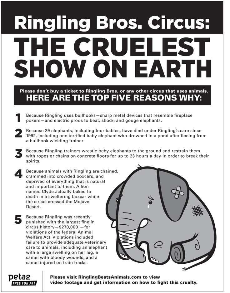 how animals are treated in circuses philosophy essay Philosophy places-travel politics should animals perform in circuses 19% say yes animals are treated well the circus animals are well fed.