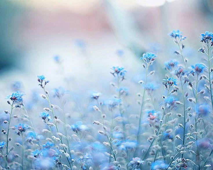 7 best blue images on pinterest blue floral wallpaper