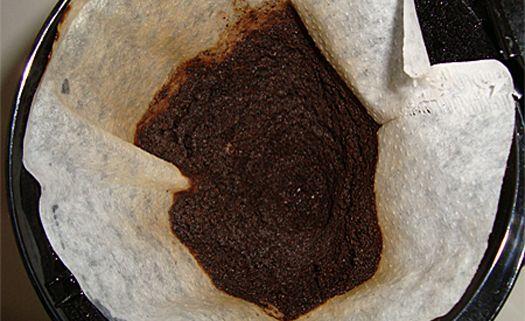 Borra de café: cinco usos que podem ajudar as plantas do jardim.