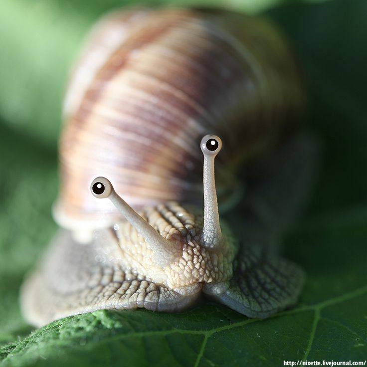 such cute little snail eyes...Hey! I am a little shortsighted that's all, and my medicare does not cover glasses neither. Don't be so judgemental and square minded, Gosh!