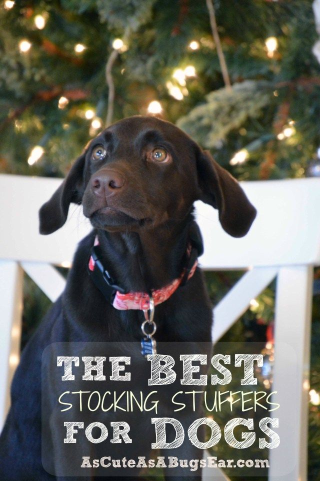 The BEST Stocking Stuffers for Dogs   As Cute as a Bug's Ear  Check out what our Puppy will find under the tree this year! #ClausAndPaws ad