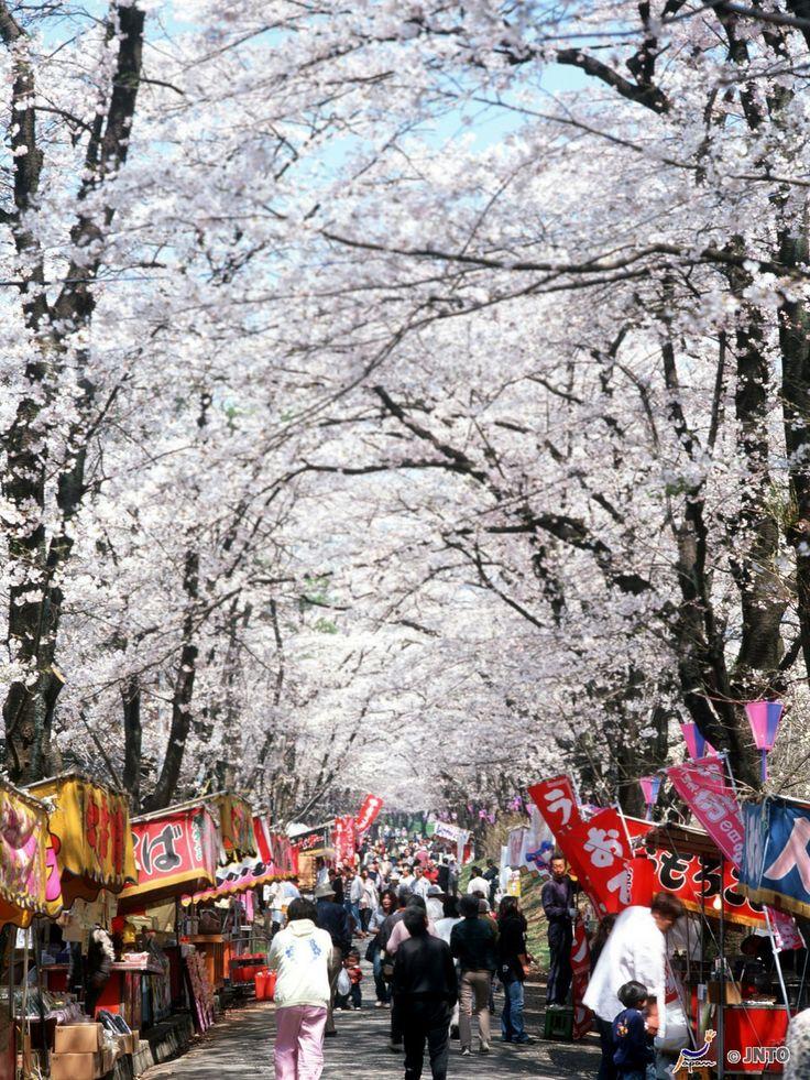 Maebashi City in Japan in voller Kirschblüte.