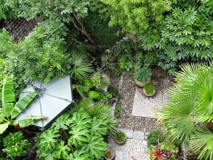 1000 id es sur le th me jardin exotique sur pinterest for Arbre exotique exterieur