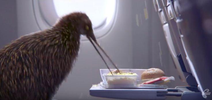 独特なクリエイティブに定評!ニュージーランド航空の最新作ビデオは、現地を象徴する国鳥が主役   AdGang