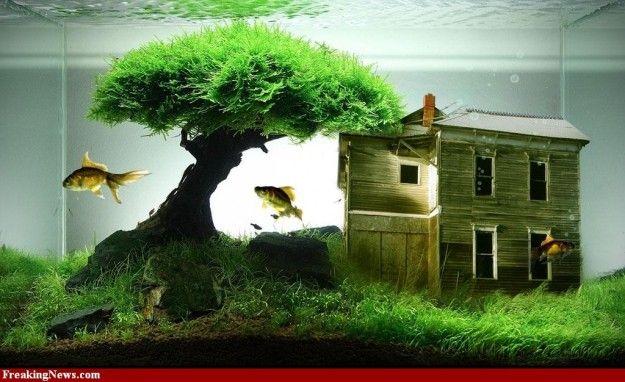 Aquarium with little house