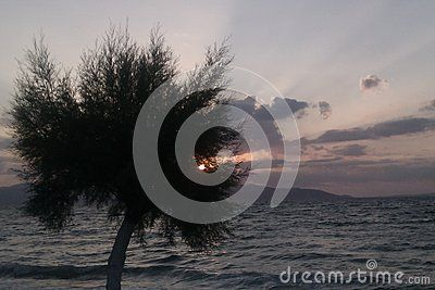 Tamarisk tree at sunset on coast of Agistri Island, in the Saronic Gulf Greece. Taken in July 2014. Peloponnese coast is in the background.