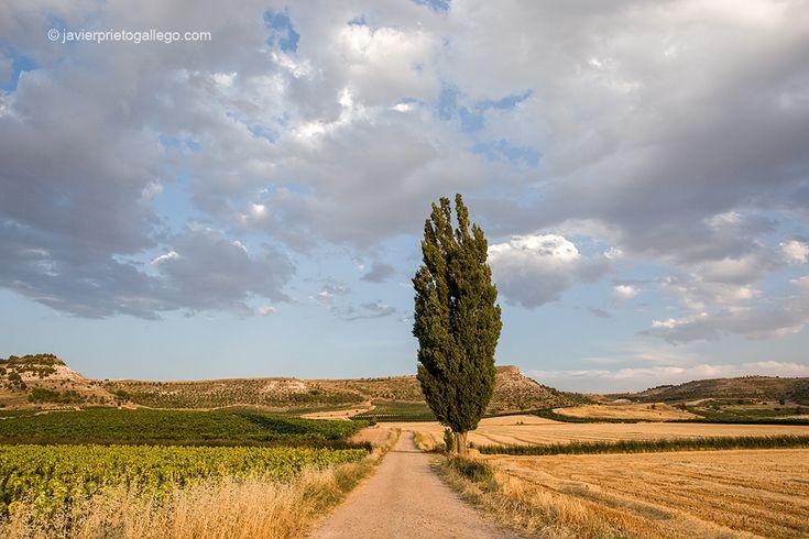 Campos en agosto. Ribera del Duero. Roturas. Valladolid. Castilla y León. España…