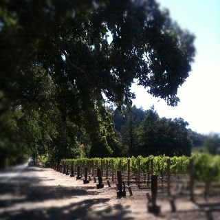 Napa Valley ~ Stags Leap District