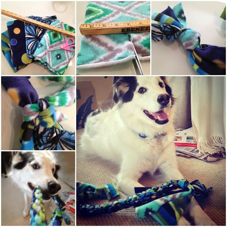Make Dog Tug Toy: 298 Best Images About DIY Pets Projects On Pinterest