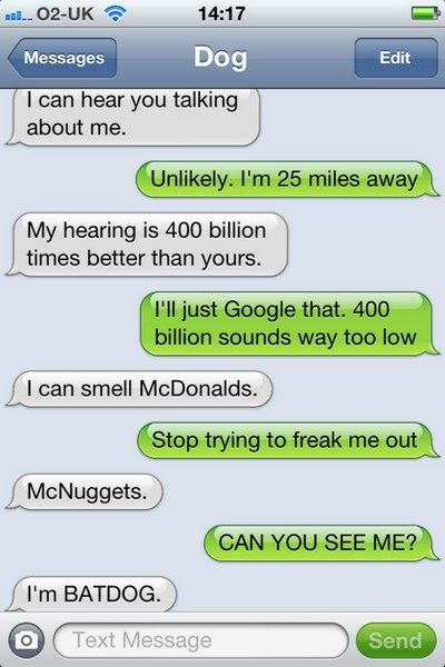 funny, funny pictures, funny photos, funny texts, dog, funny dogs, 10 Funniest Texts from Dog.