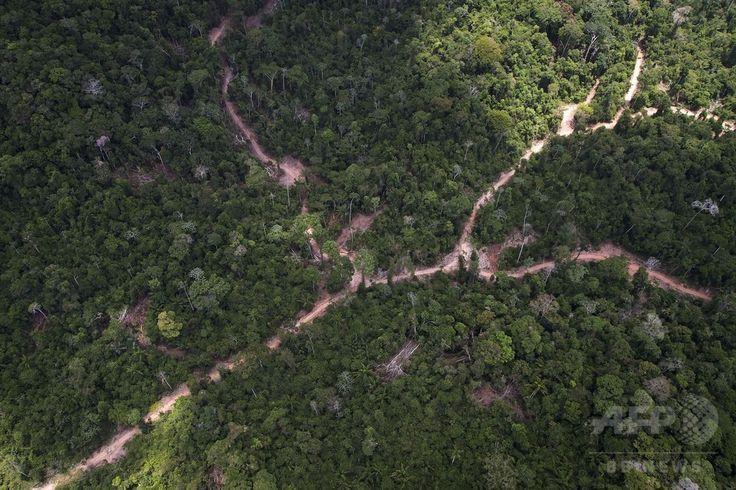 ブラジル・パラ(Para)州に広がる熱帯雨林で行われている違法伐採の現場(2014年10月14日撮影)。(c)AFP/Raphael Alves ▼16Oct2014AFP|上空から見たアマゾンの違法伐採現場 http://www.afpbb.com/articles/-/3029095 #Illegal_logging #Para_Brazil