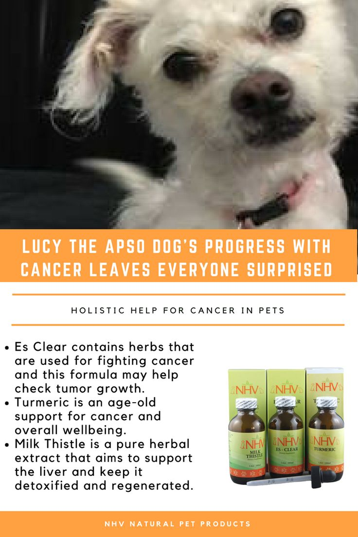 Cancer herbs for dogs - Finding Out Your Pet Has Cancer Is A Nerve Wrecking Experience For A Pet Parent