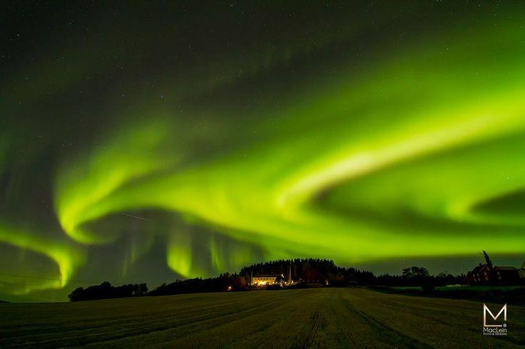 Dansende nordlys på Mære i kveld (Foto: Anne Lein Kristiansen )