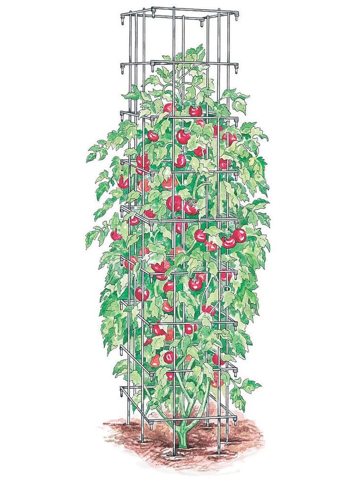 Gaiolas de tomate | Compra de Abastecimento do jardineiro