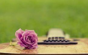 Wallpaper summer, grass, clearing, guitar, rose