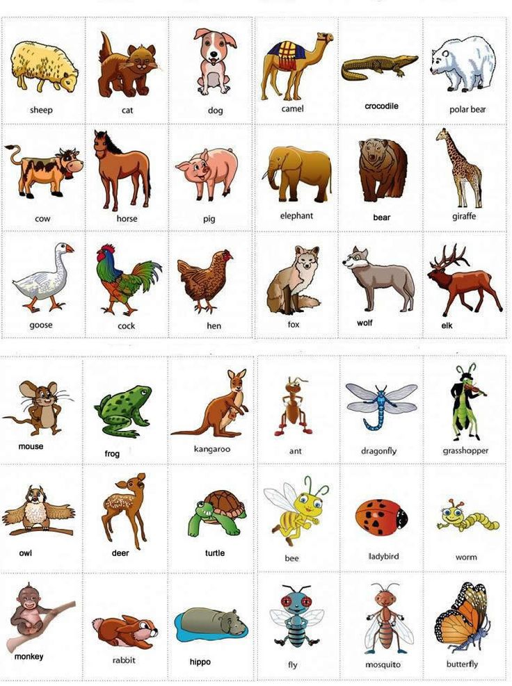 Learning English vocabulary for animals using pictures