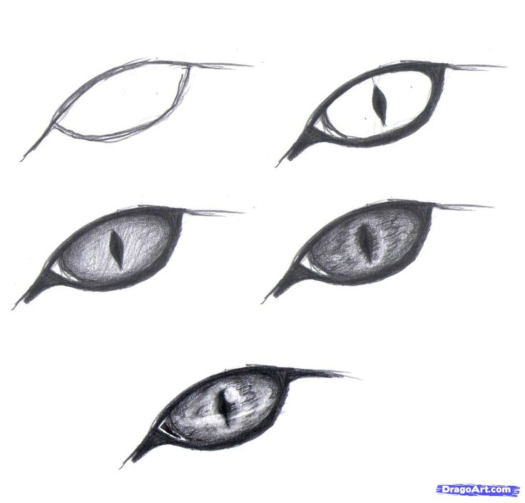 10 Best images about DRAW CAT EYEY on Pinterest | Drawing ...