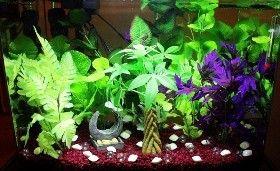Aquarium/Housing - Betta Late Than Never Rescue