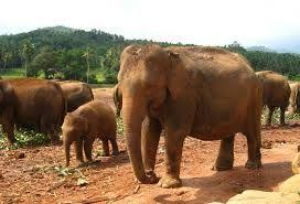 オレンジの「象」