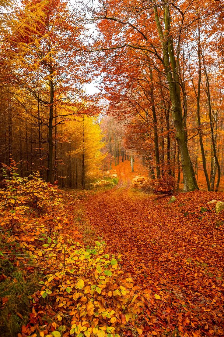 Beautiful Autumn Sunset: 1000+ Images About I Love Fall! On Pinterest