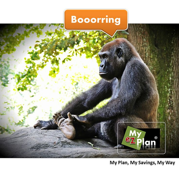 Yech ! Enjoyable Animal | Do not miss the incredible places, that this city has to offer you. Visit myezplan.com and start planning your next vacation -  | Moving Concert Event | Kids activities in Merida in Mexico #cute #pets #naturelover #farm #animallovers
