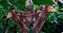 Image result for uniquely colored animals