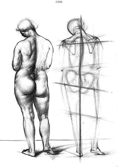 Művészeti anatómia (20. kiadás)