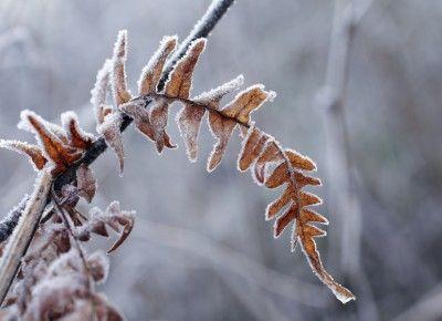 94 best Winter Preparedness images on Pinterest